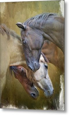 Togetherness - Ryan Courson white, black and bay horses horse art Horse Photos, Horse Pictures, Animal Pictures, All The Pretty Horses, Beautiful Horses, Animals Beautiful, Painted Horses, Zebras, Animals And Pets