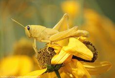 Bird Grasshopper by Andres-Cadena.deviantart.com on @DeviantArt