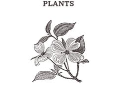 Illustrations in the category Plants