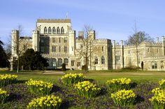 Ashridge, UK in Spring