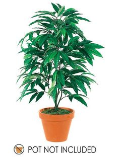 3' Mango Tree x4 w/283 Leaves Green (Pack of 6) * To view further for this item, visit the image link.