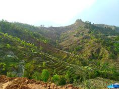 Entre savoir faire agricole ... et dégradation de l'environnement mon cœur se questionne #agriculture #rice #nepal #mountain #montagne