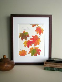 Pressed leaves print, 11x14 double matted, Fullmoon Maple leaves, bright fall autumn color, wall decor no. 0042