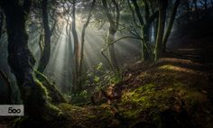 Sunrise on the Laurwl by Raúl García Forest Photography, Stunning Photography, Tenerife, Real Life Fairies, Magical Forest, Walk In The Woods, Beautiful Sunrise, Timeline Photos, Faeries