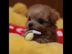 Dog cute puppy - Dog playing - Dogs Channel