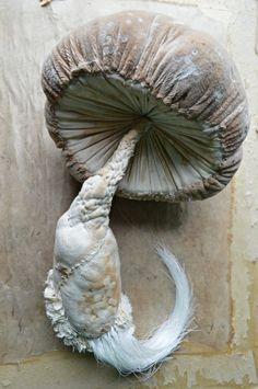 Soft sculpture Textile art Mister Finch Toadstool by MisterFinch Textile Sculpture, Textile Fiber Art, Textile Artists, Soft Sculpture, Mr Finch, Mister Finch, Mushroom Crafts, Mushroom Art, Fairytale Creatures