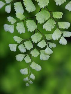color inspiration | green - fern