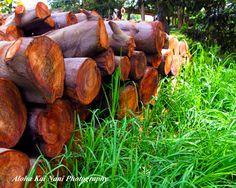 Koa Wood, Maui