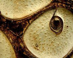Tree Bark Photo/ Nature Photography / Home Decor / by PforPoppy, €11.00