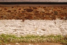 Stone wall with limewash and daisies in Cornwall, South West England