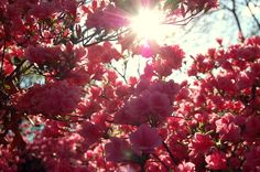 filtered pink