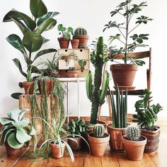 "253 Likes, 2 Comments - Anne (@botanicalsandbillie) on Instagram: ""Such a beautiful plant set up by one of my favorite accounts @tribeandus #followfriday I wish I had…"""