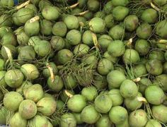 28 Best Fresh Coconut(husked/Semi Husked) & Dry Coconut