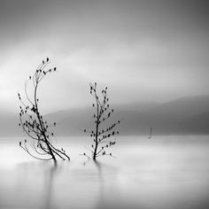 Les-somptueuses-minimalistes-photos-noir-et-blanc-de-nature-de-George-Digalakis-12 Les somptueuses minimalistes photos noir et blanc de nature de George Digalakis