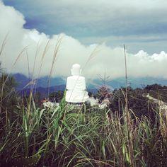 Young susuki grass in Vietnam, Bana hills. #vietnam #vietnam🇻🇳 #banahills #buddha #bigbuddha #southeastasia #visualpoetry #artistsofinstagram #artjournal #inkpainting #peoplescreatives #journaling #freeverse #poetryisnotdead #visualcrush #journaling #calledtobecreative #mixedmedia #moodygram #moodygrams #indie #tumblr #inkandverses #nature #ontopoftheworld #вьетнам #природа #юговосточнаяазия #будда #горы #путешествие Southeast Asia, Exploring, Vietnam, Grass, Buddha, Tumblr, Create, Instagram, Grasses