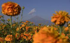 Conoces la leyenda de la flor de cempasúchil?