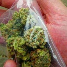 Cannabis Seeds for Sale since 2003 Cannabis Seeds For Sale, Cannabis Seeds Online, Cannabis Oil, Growing Marijuana Indoor, Cannabis Growing, Just In Case, Buy Weed, Weed Shop, Ganja