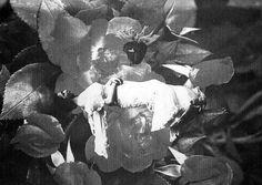 floral levitations