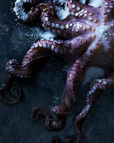 Octopus, 2016 Pigment Ink, Limited Edition Prints, Watercolor Paper, Octopus, Giclee Print, Fine Art Prints, The Incredibles, Pure Products, Instagram Posts