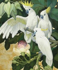 Cockatoos by Jessie Arms Botke (American, Bird Illustration, Botanical Illustration, Pictures To Paint, Art Pictures, Art Scratchboard, Art Tropical, Images D'art, Bird Artwork, Bird Drawings