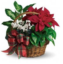 Holiday Homecoming Basket, Christmas Gift Basket, Holiday Gifts, Poinsettia Gift Basket from Allen's Flower Market of Reseda.  http://www.allensflowermarketonline.com/holiday-homecoming-basket/