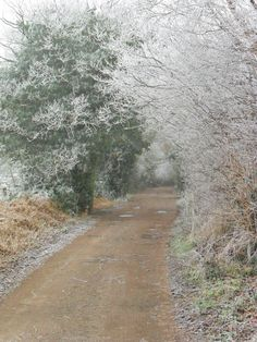 vwcampervan-aldridge: frozen trees at Back Lane, Aldridge, Walsall, West Midlands Walsall, Dry Creek, Wide World, Winding Road, West Midlands, Take Me Home, English Countryside, Beautiful Landscapes, Wonders Of The World