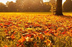 De mooiste herfstplaatjes http://www.reiskrant.nl/r/24518801  #herfst