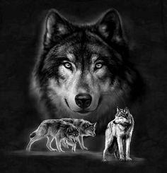 Kaisa-Idas blogg - Redd ulven! Hunden.no