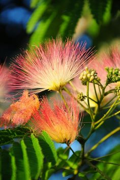 Spring's last delicate flower....