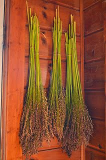We harvested the broom corn months ago and only recently is it dry enough to work with. Broom Corn, Witch Broom, Corn Husk Crafts, Brooms And Brushes, Fall Arrangements, Small Farm, Garden Care, Nature Decor, Summer Garden