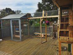 Our beautiful cat enclosures - mae - Playground Cat Habitat, Purebred Cats, Outdoor Cat Enclosure, Cat Run, Animal Room, Cat Playground, Cat Garden, Cat Condo, Outdoor Cats