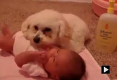 Dog protecting baby from the vacuum is too cute!