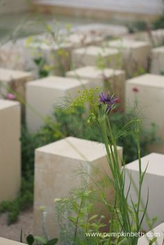 A closer look at the Maltese wildflowers pictured in the M&G Garden, which was designed by James Basson, for the RHS Chelsea Flower Show This Show Garden was built by Crocus. Wild Style, Chelsea Flower Show, Maltese, Wildflowers, Closer, Plants, Fun, Pictures, Gardens