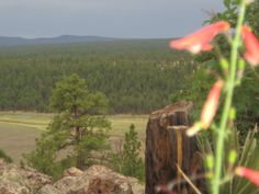 Pic from our campsite near Upper Lake Mary in Flagstaff, AZ.  We were in dispersed camping, the only way to go!