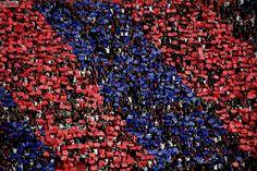 Hagamos top a un grande San Lorenzo As Roma, Grande, Passion, Watch, Link, Santos, Ravens, Champs, Sports