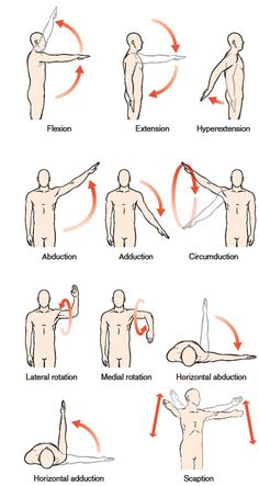diagrams and terms of motion that can occur at the glenohumeral joint