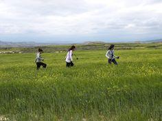 Campos de trigo en la ribera de Navarra.