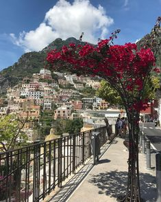 Amalfi Coast Tours in south of Italy by locals. Discover the Amalfi Coast with us by visiting places like Amalfi, Ravello, Capri, Positano. Hotel Amalfi, Amalfi Coast Hotels, Amalfi Coast Italy, Positano, Yard, Places, Summer, Dreams, Check