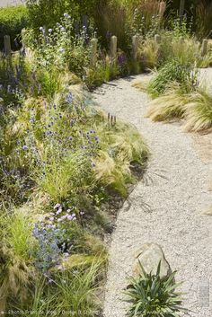 About our portfolio - Front garden and side garden in beach atmosphere. DESIGNED BY: Jacqueline Volker – www. Coastal Gardens, Beach Gardens, Outdoor Gardens, Gravel Garden, Garden Paths, Landscape Design, Garden Design, Australian Native Garden, Prairie Garden