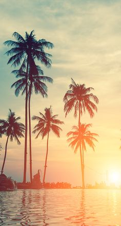 Amazing view of some palm trees with a beautiful sunset in the background Palm Wallpaper, Summer Wallpaper, Nature Wallpaper, Wallpaper Backgrounds, Summer Backgrounds, Palm Tree Pictures, Cool Pictures, Aesthetic Backgrounds, Aesthetic Wallpapers
