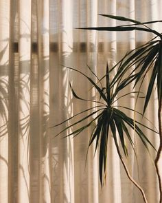 By Sophievintage fondos Plant Aesthetic, Aesthetic Photo, Brown Aesthetic, Aesthetic Vintage, Instagram Feed, Instagram Posts, Light And Shadow, Photos, Pictures