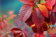 autumn leaves against sunlight