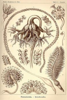 antique meduse