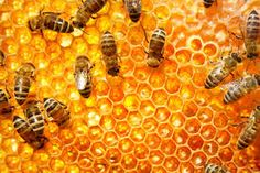 Image result for bee