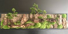 Bonsai Wall Panel by Donaldo Radovich Indoor Garden, Garden Art, Indoor Plants, Garden Design, Moss Wall Art, Moss Art, Bonsai Art, Bonsai Garden, Small Garden Features