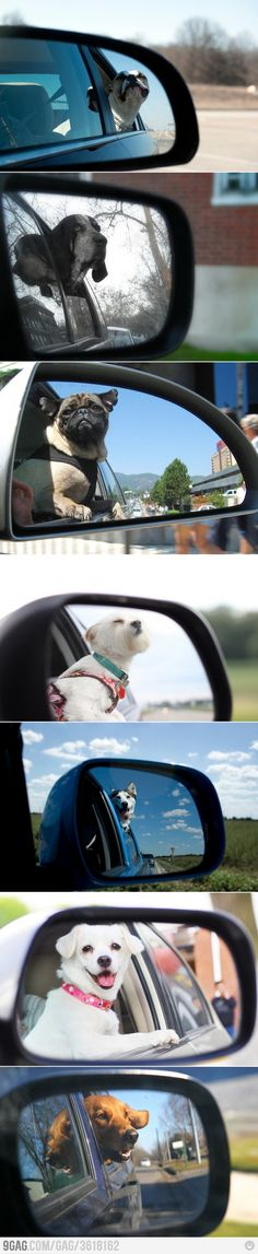 Objects In Mirror Are Cuter Than They Appear