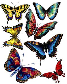 Printables: Butterflies (LOTS of beautiful butterfly graphics here). Butterfly Images, Butterfly Drawing, Butterfly Crafts, Butterfly Wings, Butterfly Tattoos, Illustration Papillon, Butterfly Illustration, Paper Butterflies, Beautiful Butterflies