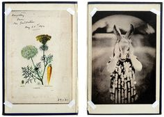 """Bunnykins"" - Original photographic images mounted on antique book boards."