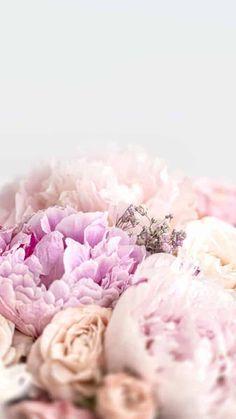 Flowers Photos Wallpaper, Yellow Flower Wallpaper, Free Flower Wallpaper, Spring Flowers Wallpaper, Pink Flower Photos, Beautiful Flowers Wallpapers, Pink Wallpaper Iphone, Wallpaper Pictures, Disney Wallpaper