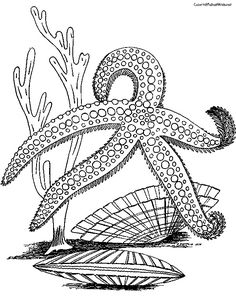 Starfish Coloring Pages | Animals Coloring Pages | Pinterest ...